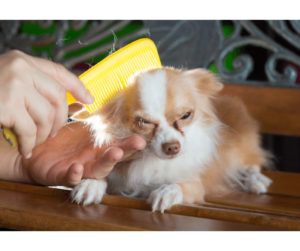 Lavare il cane